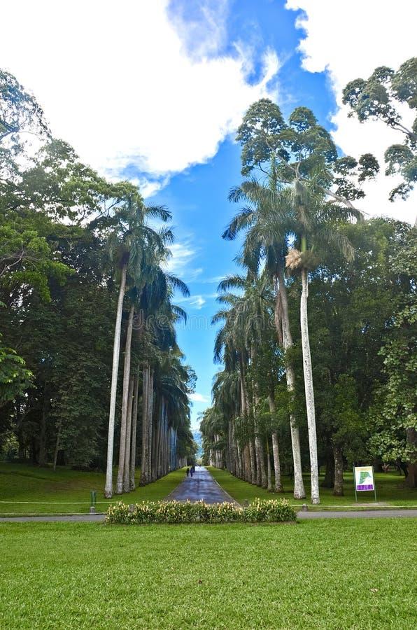 Jardin botanique royal, Peradeniya Sri Lanka photo libre de droits
