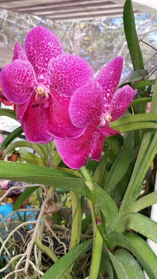 Jardin botnical de Peradeniya image stock