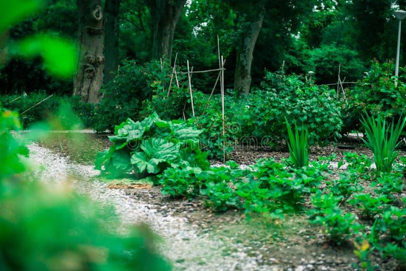 Jardin communal de ville images libres de droits