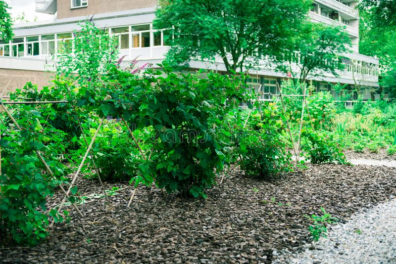 Jardin communal de ville images stock