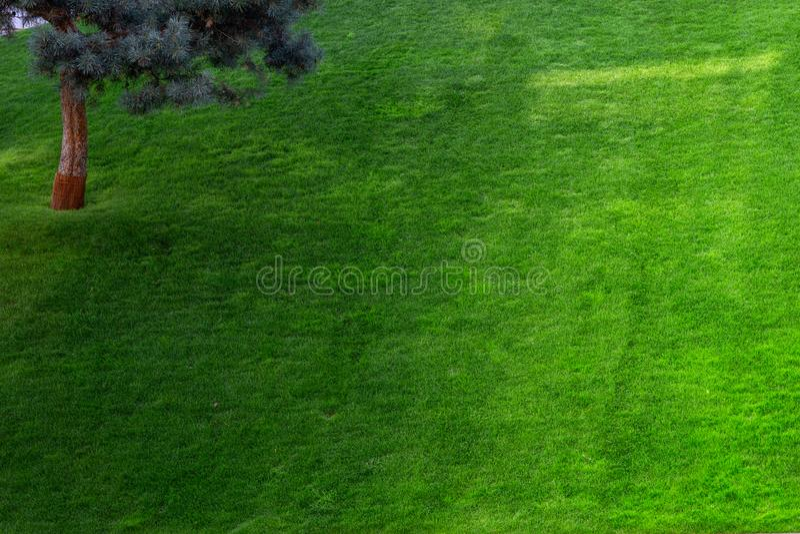 Jardin décoratif vert Paysage neutre avec un champ vert Arbre du paysage Park photographie stock libre de droits