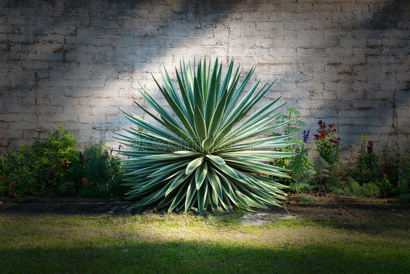 Jardin d'agrément d'usine de style de cactus images libres de droits