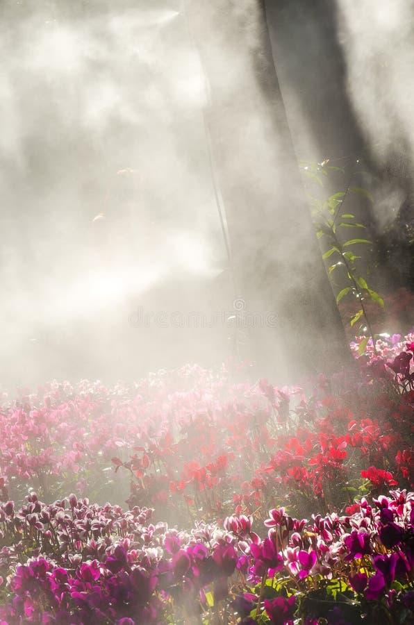 Jardin d'agrément dans le brouillard images stock