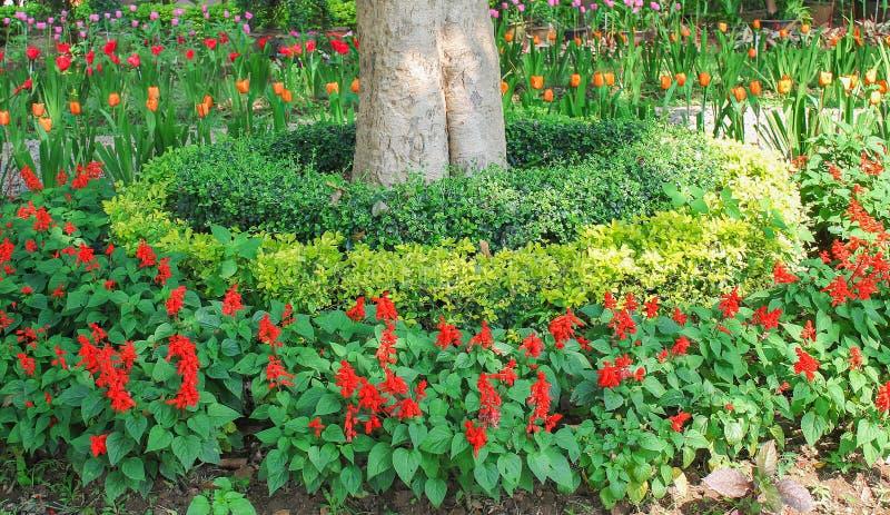 Jardin d'agrément de paysage, fond extérieur de modèles de nature photographie stock libre de droits