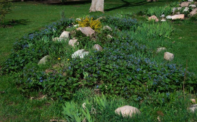 Jardin d'agrément en parc de ville, fleurs et fleurs bleues sur la colline avec des pierres photographie stock