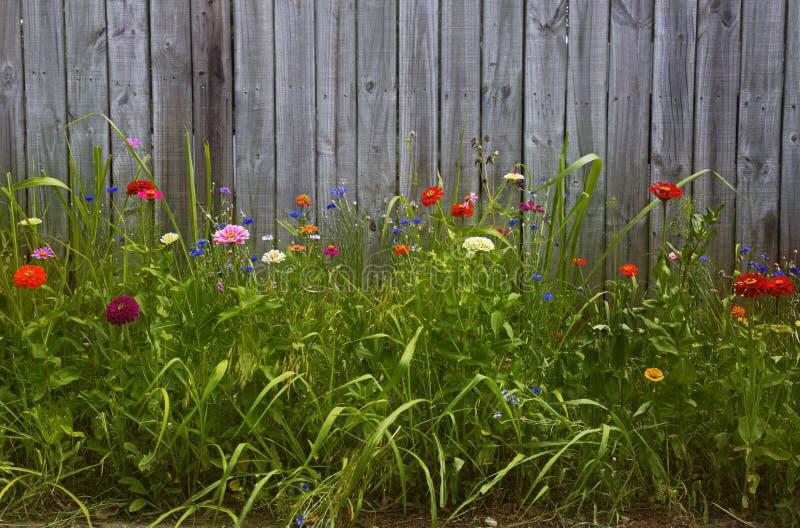 Jardin d'agrément grand devant la barrière en bois photo libre de droits