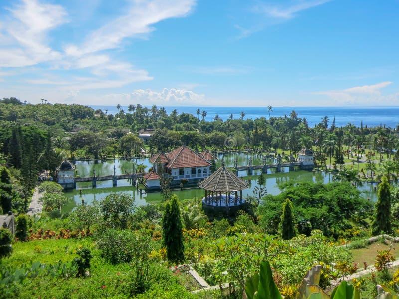 Jardin d'agrément tropical avec la grande piscine Frangipani de rose de jeune usine Terrasses de cascade avec la végétation Refle images libres de droits