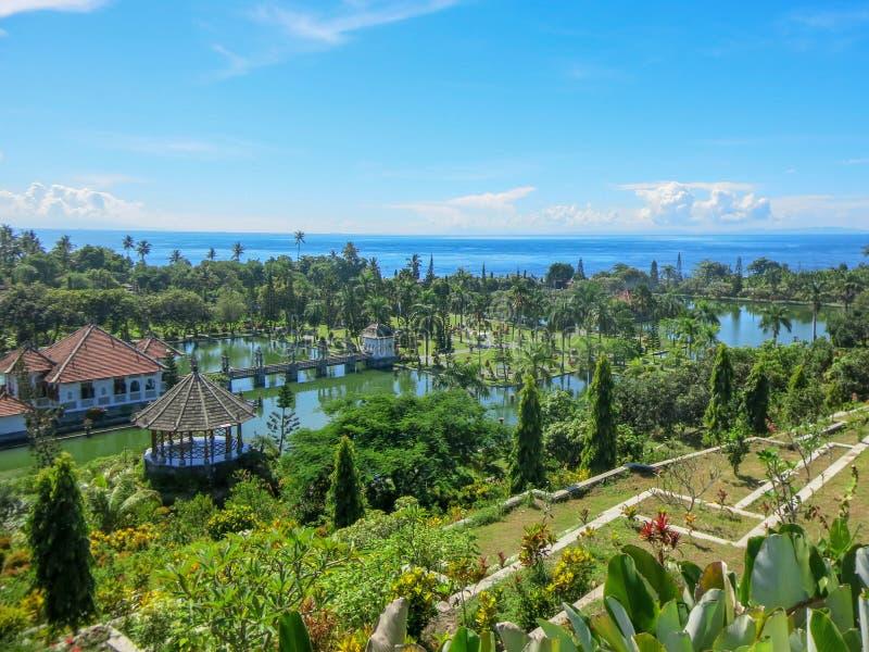 Jardin d'agrément tropical avec la grande piscine Frangipani de rose de jeune usine Terrasses de cascade avec la végétation Refle photo libre de droits