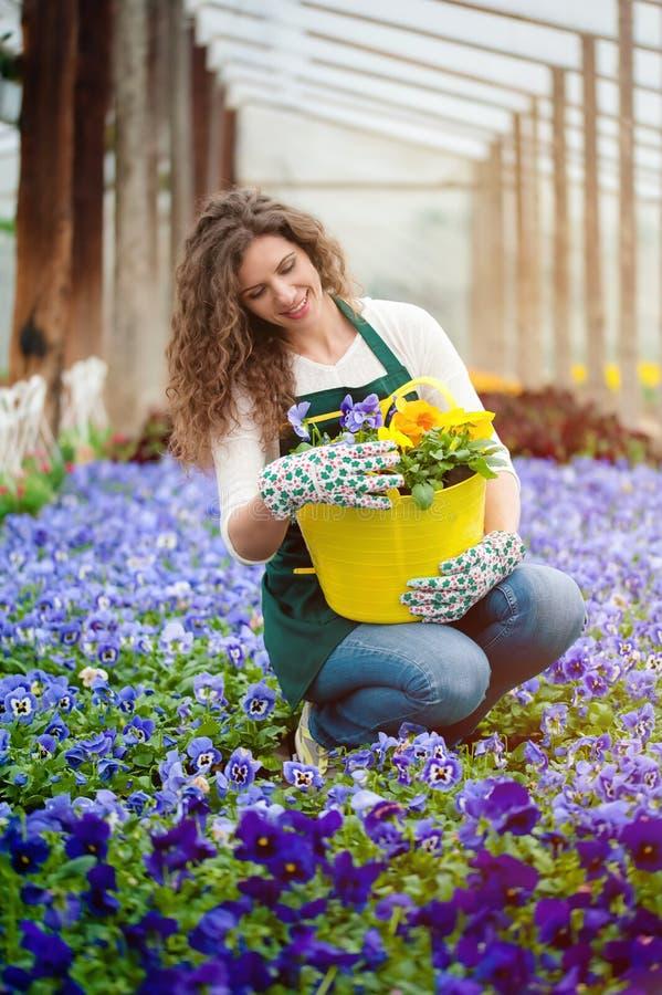 jardin d'agrément violet image stock