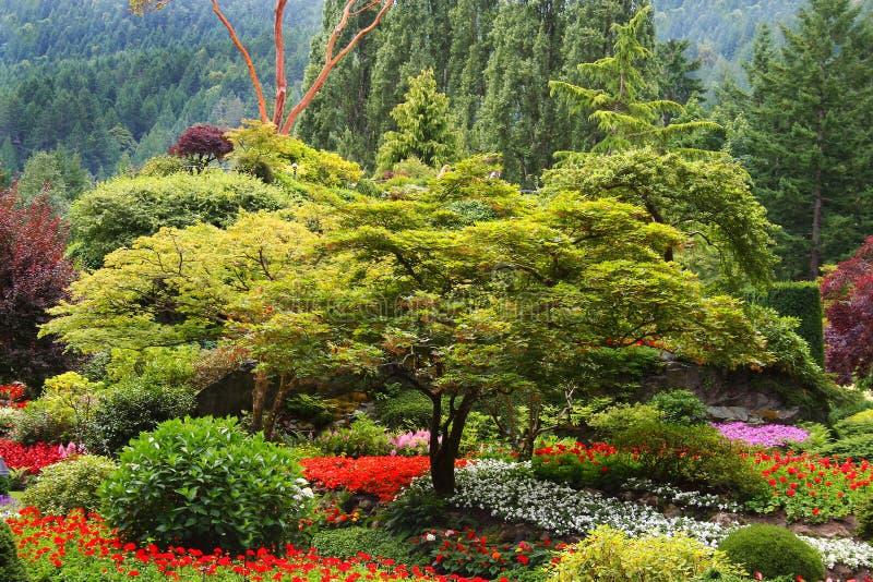 Jardin d'arbre et de fleur photo libre de droits