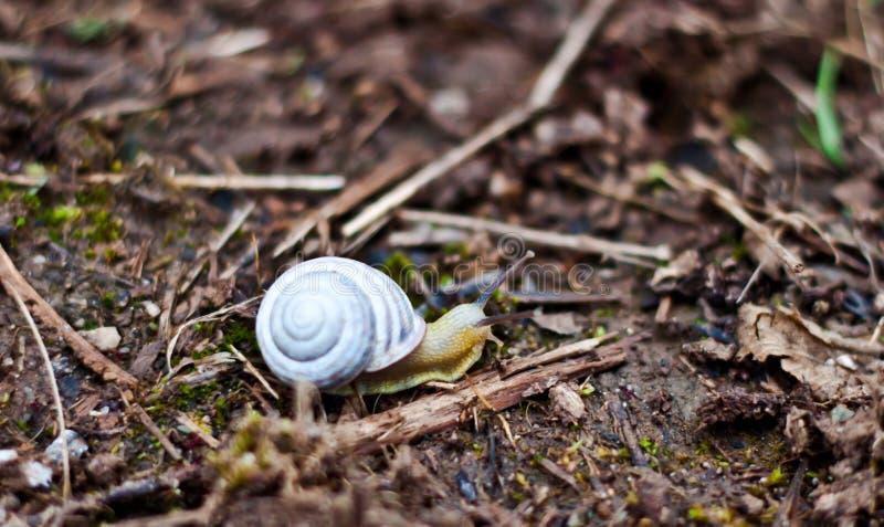 jardin d'escargot photographie stock libre de droits