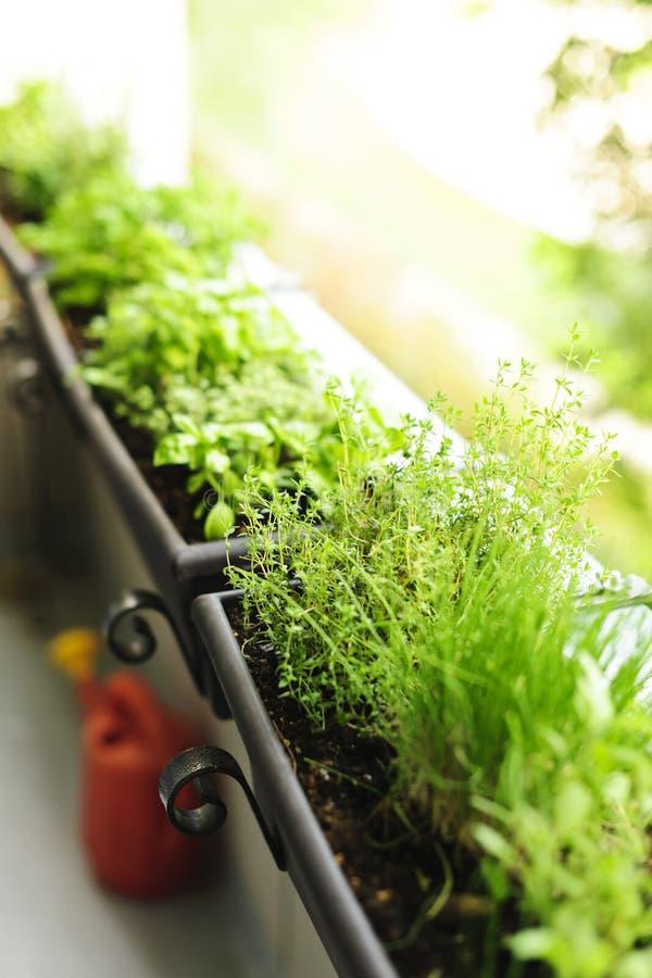 Jardin d'herbe de balcon photos libres de droits