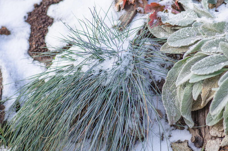 Beautiful fleurs de jardin d hiver pictures design for Jardin d hiver