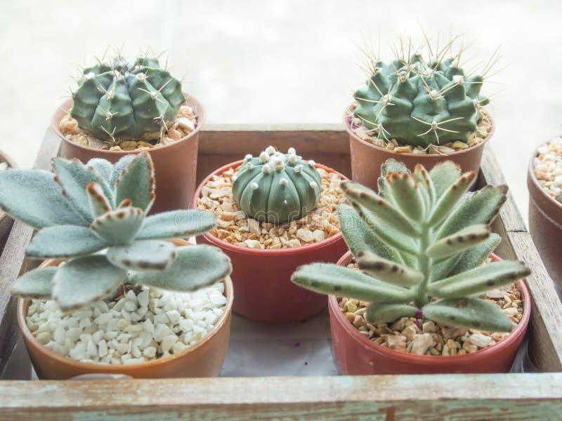 jardin d 39 int rieur de cactus photo stock image du. Black Bedroom Furniture Sets. Home Design Ideas