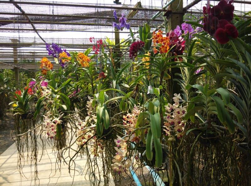 Jardin d'orchidée photographie stock