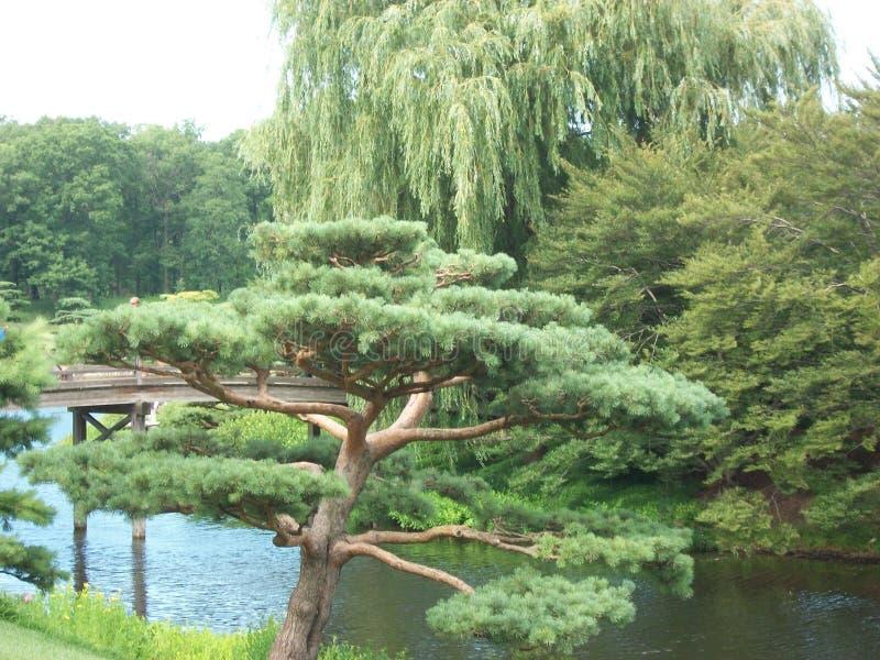 Jardin d'oriental de vue de jardins botaniques photos stock