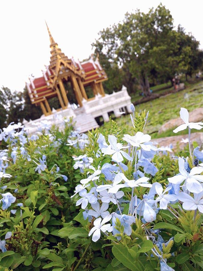 Jardin dans beau naturel rama9 images libres de droits