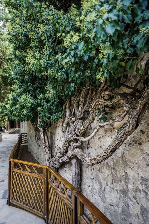Jardin dans le palais de Khan dans Bakhchisaray photos stock