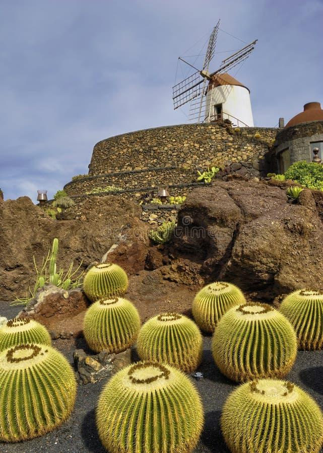 Jardin de Cactus royalty free stock photo