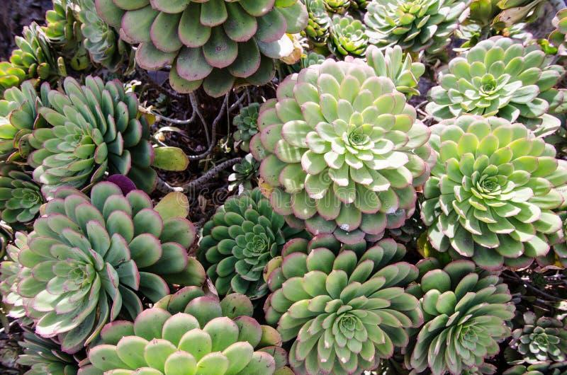 Jardin de cactus de succulents au soleil de la Californie photos libres de droits