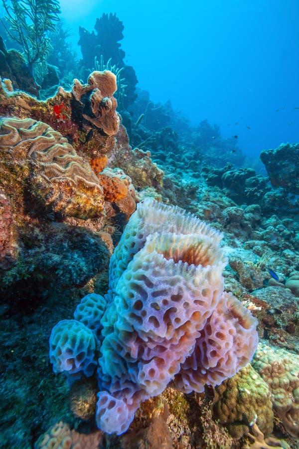 Jardin de corail des Caraïbes image libre de droits