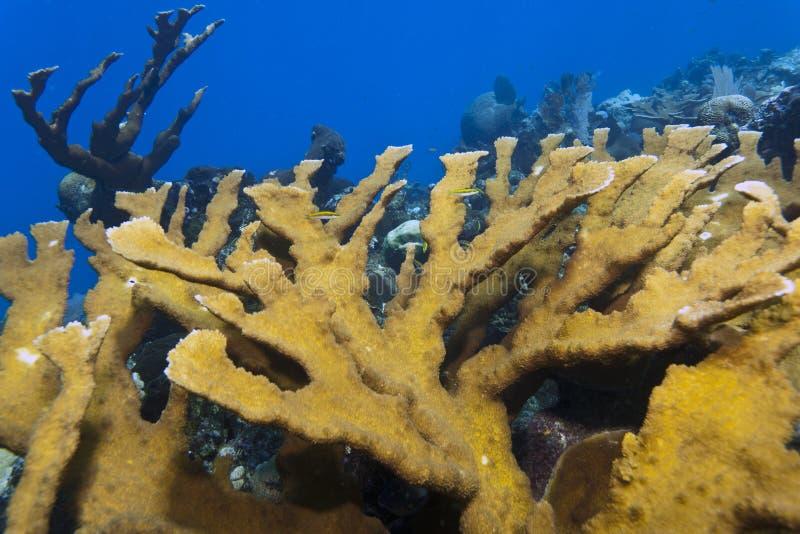 Jardin de corail des Caraïbes photographie stock libre de droits
