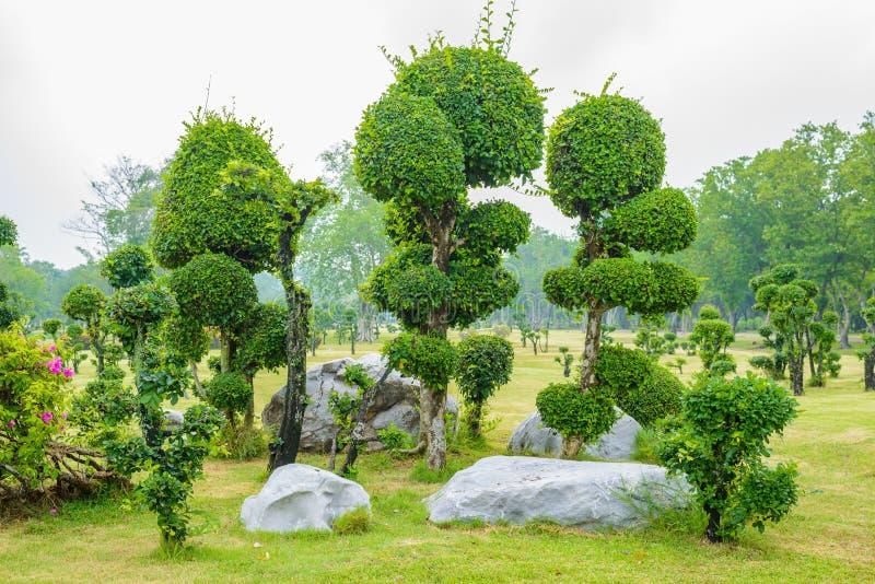 jardin de d coration d 39 arbre de bonsa s de bois d 39 b ne image stock image du vert thailand. Black Bedroom Furniture Sets. Home Design Ideas