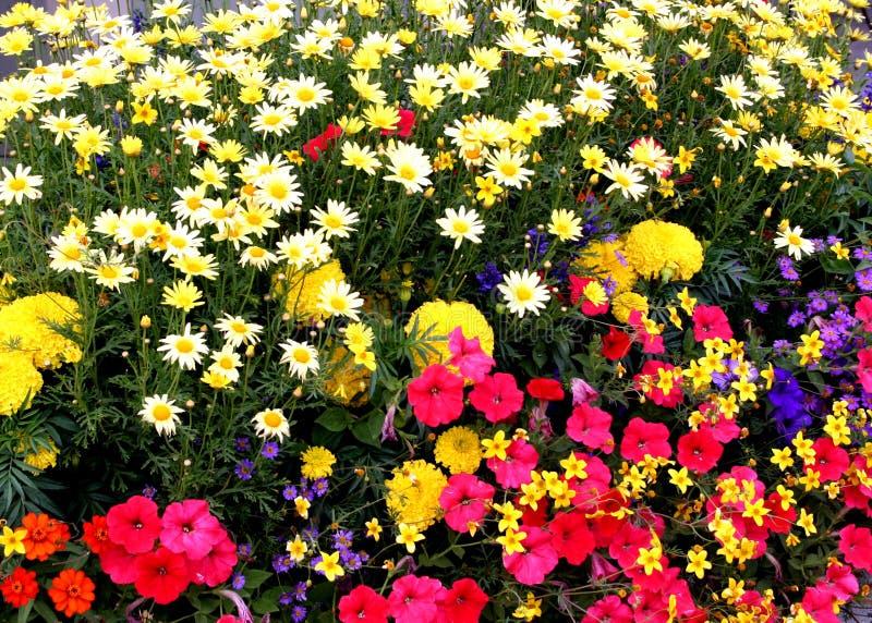 Jardin de fleur photos stock