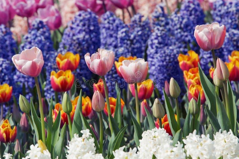 Jardin de fleur coloré photographie stock