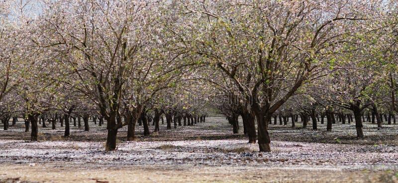 Jardin de floraison avec les arbres fruitiers photo libre de droits