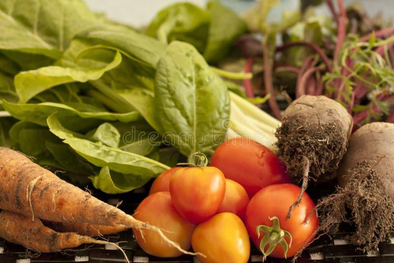 Jardin de fruits et légumes frais photos stock