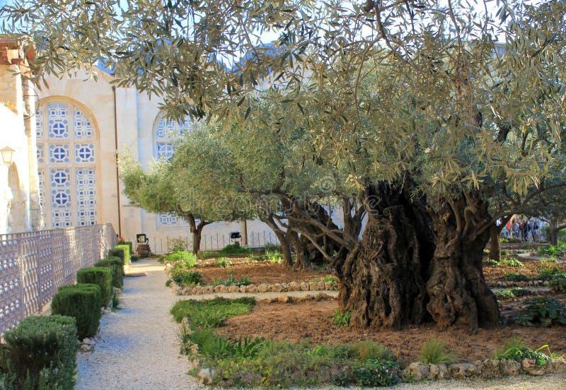 Jardin de Gethsemane et l'église de toutes les nations photo stock