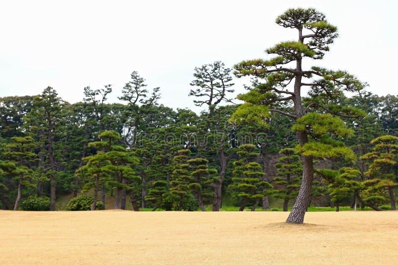Jardin de Japanease image libre de droits