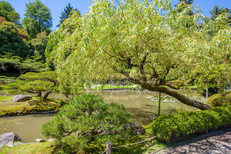 Jardin de Japonais de Portland Paysage gentil desing Jardin soigné image stock