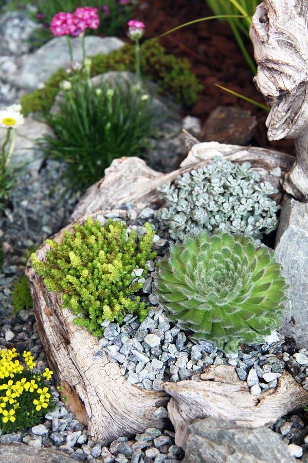 jardin de jardin de rocaille photo stock image 64960842. Black Bedroom Furniture Sets. Home Design Ideas