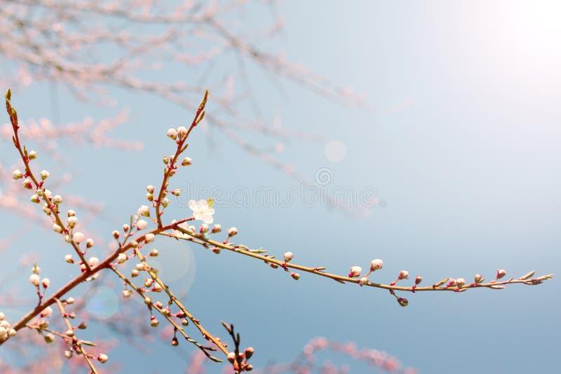 Download Jardin De Jour Ensoleillé Au Printemps Photo stock - Image du couleur, jardinage: 76077154