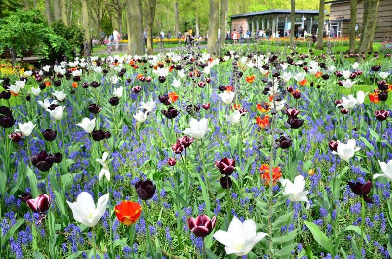 Jardin De Keukenhof, Pays-Bas - 10 Mai : Fleurs Et Fleur Colorées ...