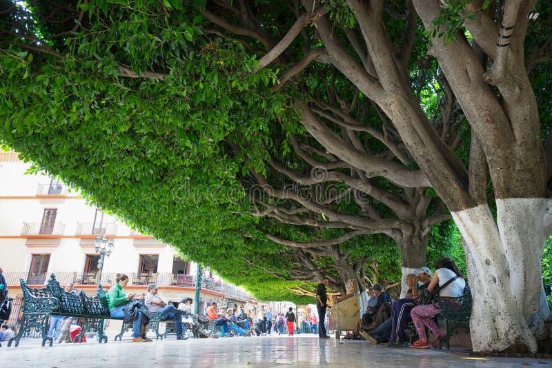 Jardin de la union guanajuato city mexico editorial photo for 7 jardines guanajuato