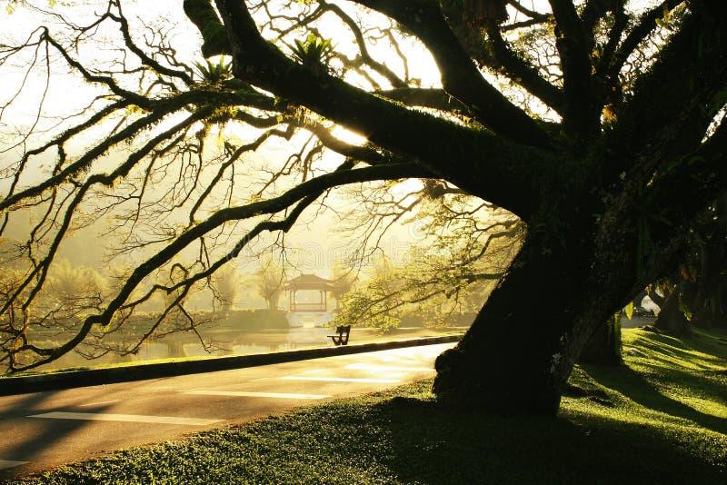 Jardin de lac taiping de matin images stock