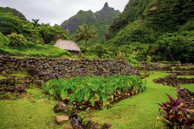 Jardin de Limahuli et conserve, Hawaï image stock