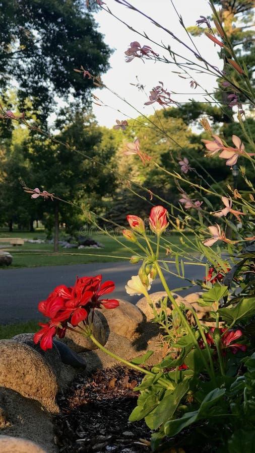 Jardin de manganèse photos libres de droits