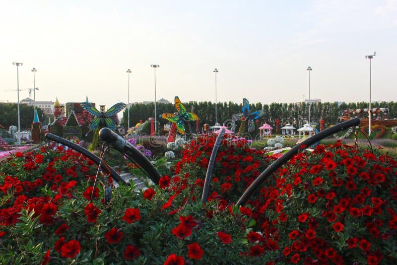 Jardin de miracle de Dubaï avec plus de 45 millions de fleurs dans un jour ensoleillé le 24 novembre 2015 Emirats Arabes Unis images libres de droits