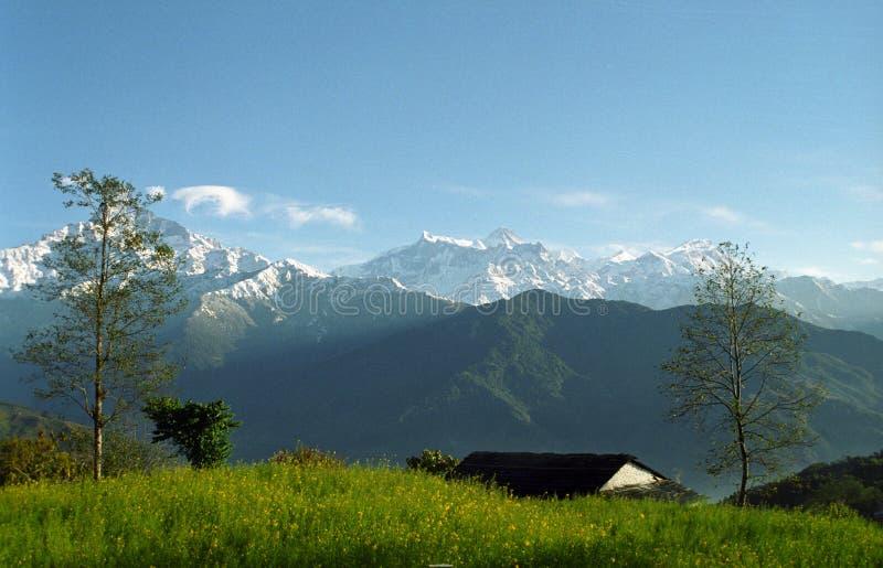 Jardin de montagne images stock