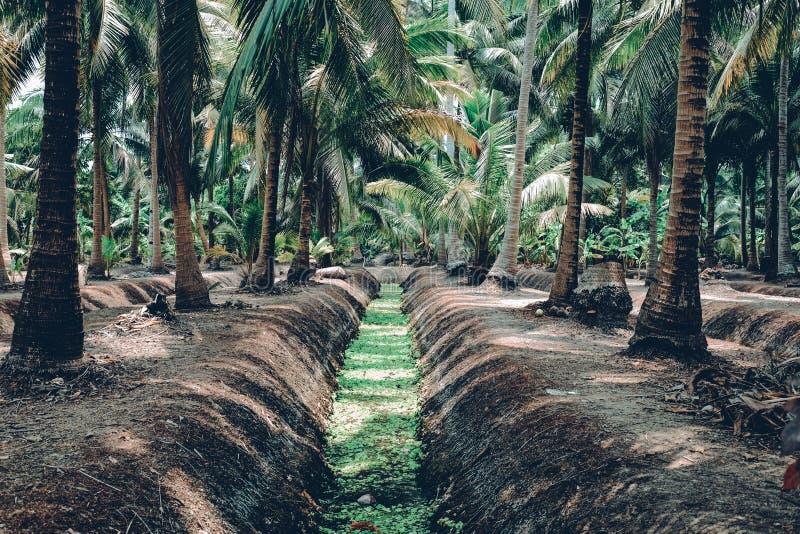 Jardin de noix de coco image stock