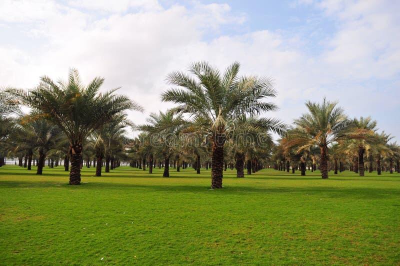jardin de palmier photo stock image du jardin dubai 4428080. Black Bedroom Furniture Sets. Home Design Ideas