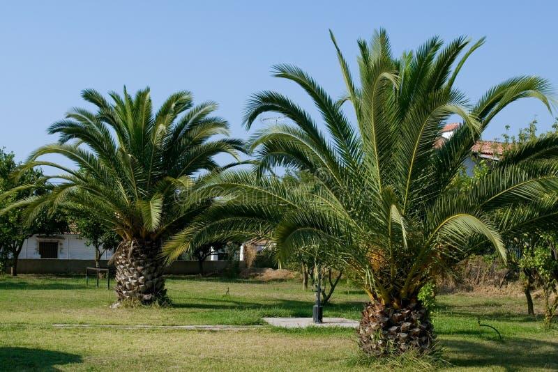 jardin de palmier image stock image du paume arbre tropical 4884315. Black Bedroom Furniture Sets. Home Design Ideas