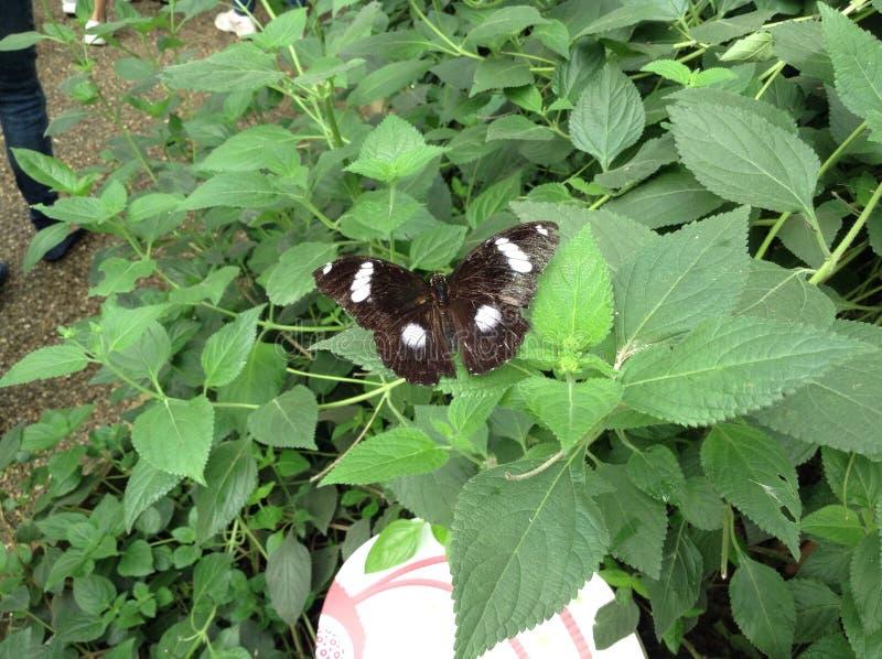 Jardin de papillon photographie stock libre de droits