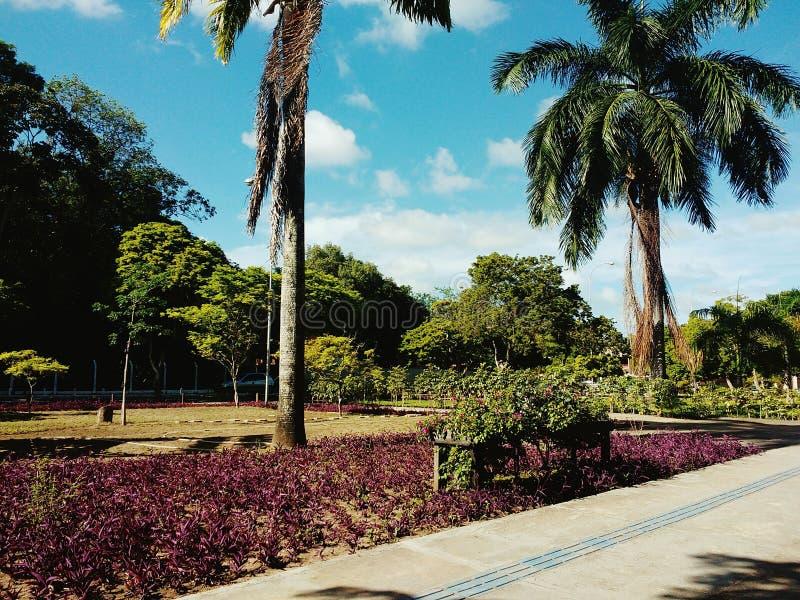 Jardin de paradis images stock