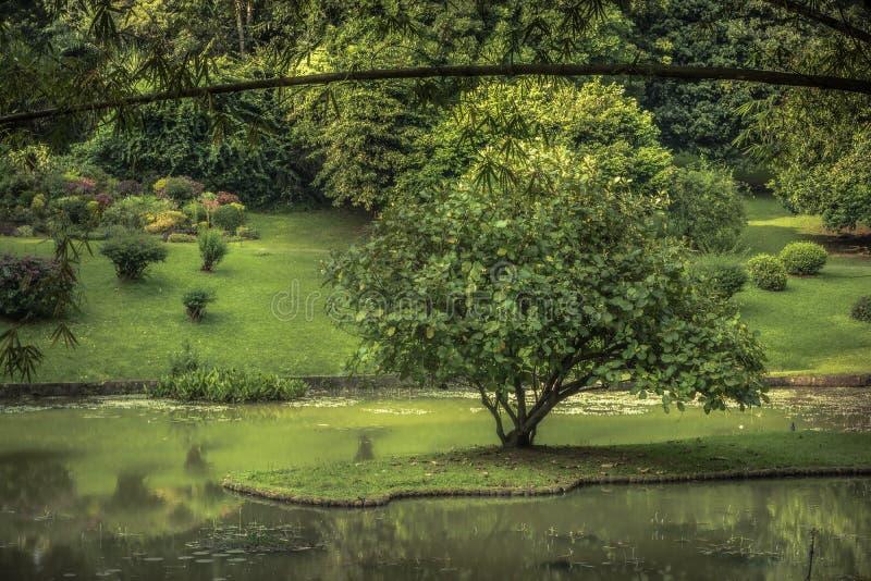 Jardin de parc public avec la conception de paysage dans le jardin royal Peradeniya dans des environs voisins de Sri Lanka Kandy images stock