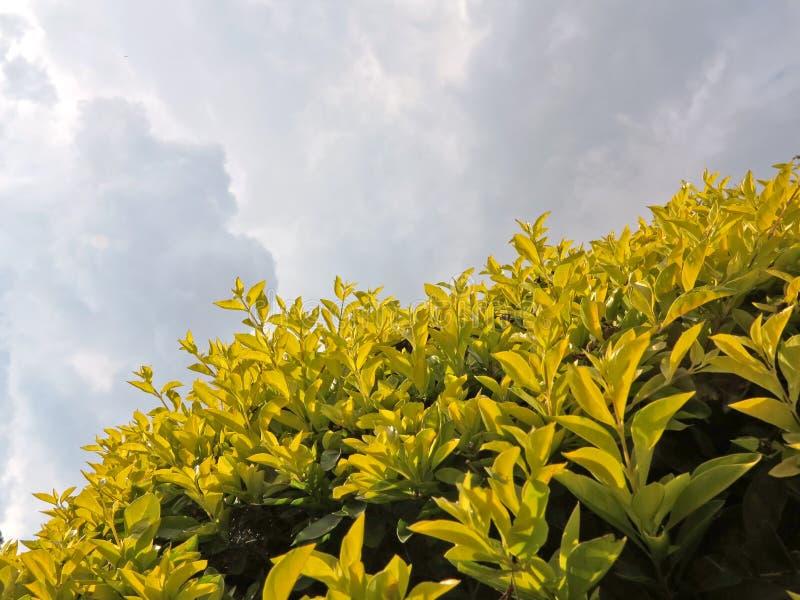 Jardin de paysage fleuri de conception beau image stock for Conception de jardin dans le paysage